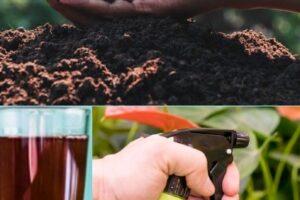 Té de composta: ¿qué es y cómo hacer té de compost?