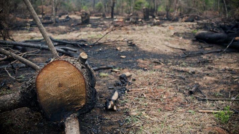 bosques quemados por aguacate