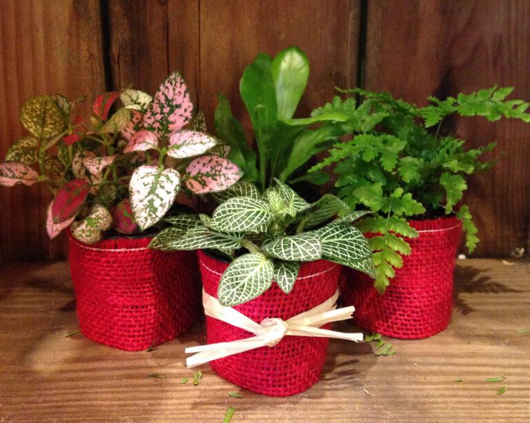 plantas verdes regalo sustentable
